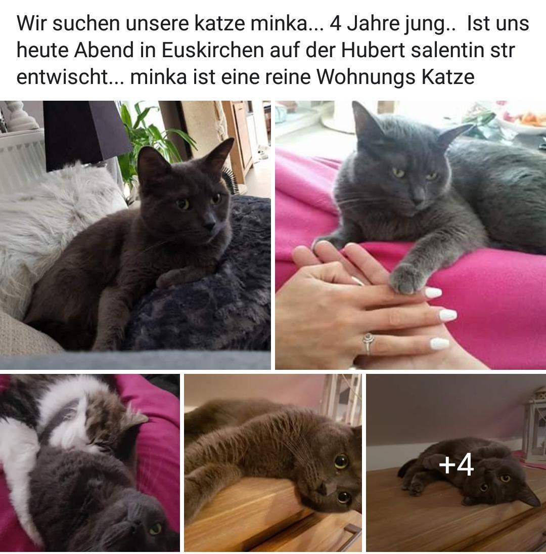 tierschutzverein mechernich vermi t in euskirchen hubert salentin str. Black Bedroom Furniture Sets. Home Design Ideas